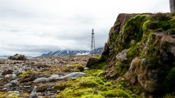 Nature-in-Ny-Aalesund-Svalbard-HGR-123364 500